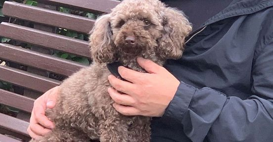 https://au.avalanches.com/sydney__sydney_man_assaulted_with_his_toy_poodle_a_man_named_seung_won_kang_171318_28_04_2020