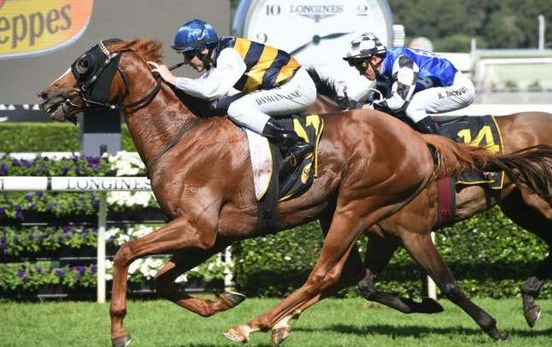 https://au.avalanches.com/sydney_gallic_chieftain_in_randwick_track_for_sydney_cup58228_08_04_2020