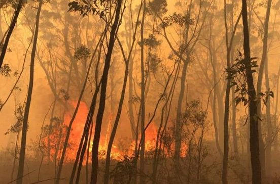 https://au.avalanches.com/sydney_nsw_south_coast_communities_hit_by_emergency_bushfires_homes_lost25740_23_01_2020