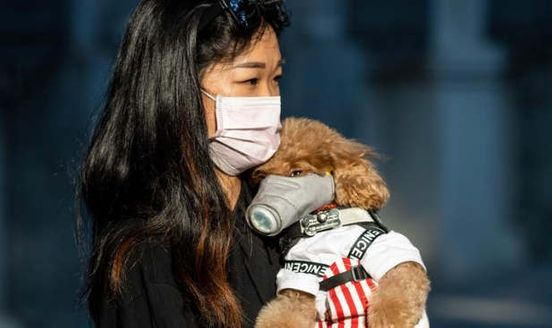 https://au.avalanches.com/sydney_coronavirus_and_dogs34052_03_03_2020