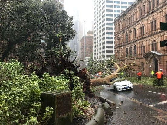 https://au.avalanches.com/sydney_devastating_storm_in_sydney29138_09_02_2020