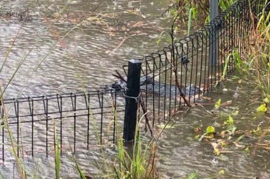 https://au.avalanches.com/sydney_flood_in_nsw_zoo24306_17_01_2020