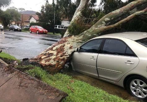 https://au.avalanches.com/sydney_sydney_rains_do_not_stop29445_11_02_2020