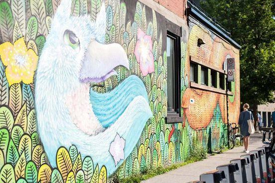 Découvrez les peintures murales colorées 🖼🎨