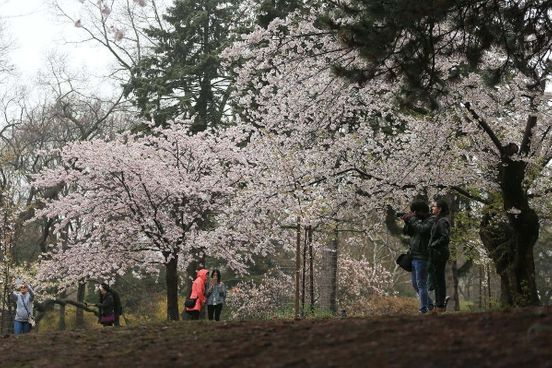 https://ca.avalanches.com/toronto_bloomcam_launched_by_toronto_for_viewing_high_park_cherry_blossoms184503_30_04_2020