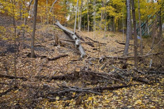 Litter removal pushed by Toronto, invasive species to be controlled in