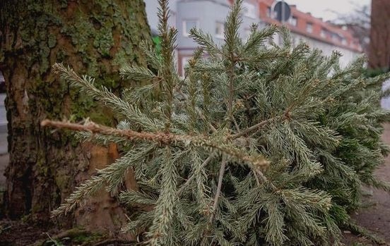 Weihnachtsbaum-Entsorgung 2020 in Frankfurt - Termine im Überblick