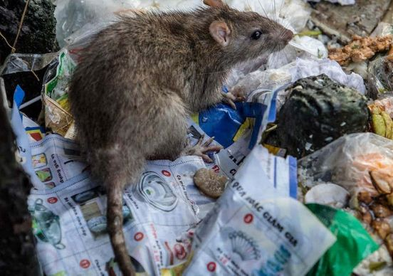 https://gb.avalanches.com/leeds_pet_controller_warns_that_no_one_is_safe_from_the_rat_epidemic_in_the_29936_14_02_2020