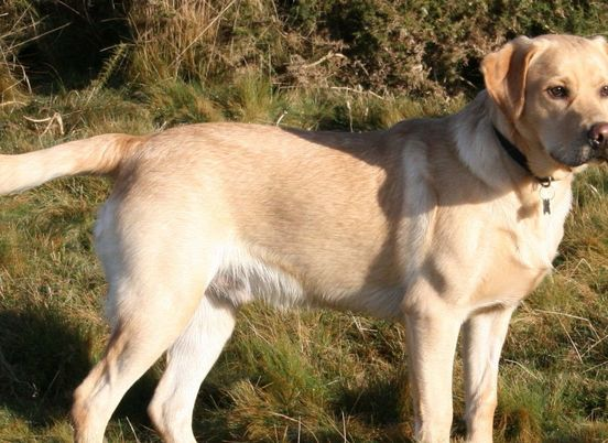 https://gb.avalanches.com/birmingham_a_labrador_seeks_his_permanent_home_one_year_after_arriving_at_birmingham_dogs_home14328_27_11_2019