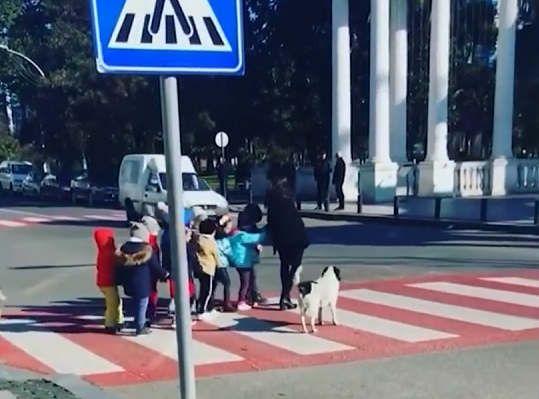 https://ge.avalanches.com/batumi_sobaka_yz_hruzyy_pomohla_shkolnykam_pereity_dorohu26166_26_01_2020