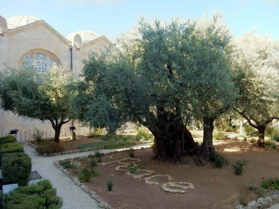 https://il.avalanches.com/jerusalem__garden_of_gethsemane_the_beauty_and_grandeur_of_jerusalem_one_of_the94030_15_04_2020