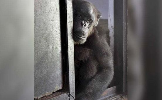 https://in.avalanches.com/new_delhi_delhi_zoo_indias_oldest_chimpanzee_fights_health_issues2798_28_09_2019