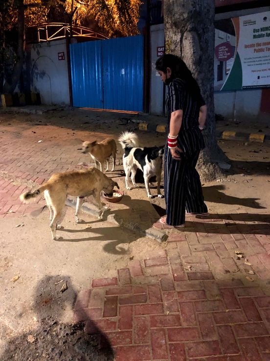 https://in.avalanches.com/new_delhi_shipra_arora_a_air_crew_feeds_about_70_stray_dogs_in_addition_to_he199854_03_05_2020