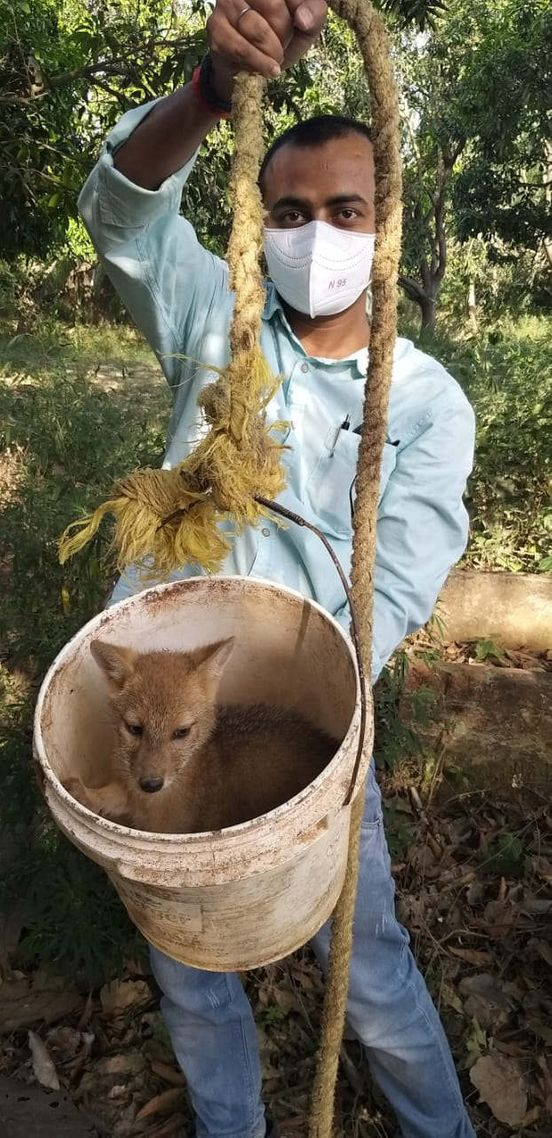 https://in.avalanches.com/lucknow_rescue_of_a_baby_jackal_from_a_20ft_deep_well289011_18_05_2020