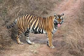 https://in.avalanches.com/jaisalmer_missing_tigress5595_12_10_2019