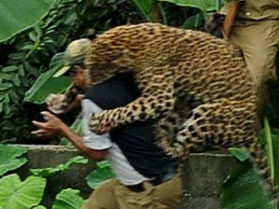 https://in.avalanches.com/jaipur_panther_attacking_on_farmer_caught31144_19_02_2020