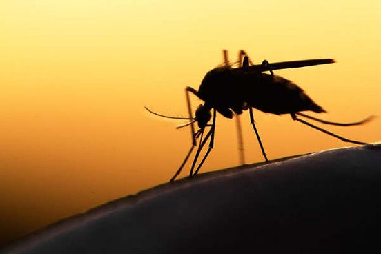 https://in.avalanches.com/jaipur_people_suffering_from_mosquito_breeding_in_dirt_18691_20_12_2019