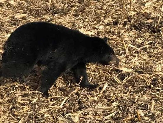 https://in.avalanches.com/jaipur_black_bear_attacks_on_farmer_in_dholpur30406_16_02_2020