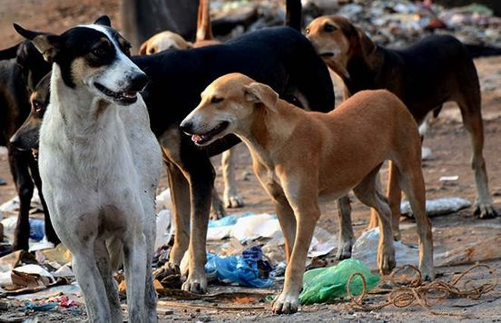 https://in.avalanches.com/jaipur_feeding_food_to_dogs_in_lockdown49414_05_04_2020