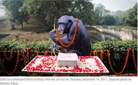 https://in.avalanches.com/delhi_delhi_rita_the_oldest_chimp_in_the_country_maaza_diet1848_22_09_2019