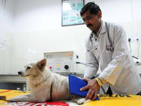 https://in.avalanches.com/delhi_volunteers_blame_the_civic_body_for_not_supplying_medicine_to_the_animal_hospital6651_19_10_2019