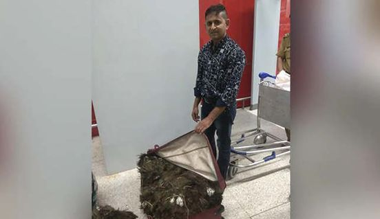 https://in.avalanches.com/delhi_delhi_airport_man_arrested_with_peacock_feather2772_28_09_2019