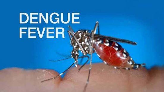 https://in.avalanches.com/kolkata_sudden_spike_in_dengue_cases_after_durga_puja_in_kolkata6202_16_10_2019