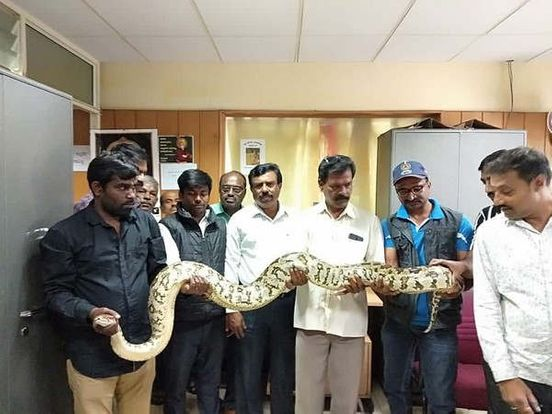 https://in.avalanches.com/bengaluru_a_12_feet_long_python_was_released_into_the_turhalli_reserve_forest_by_the_bbmp_rescue_team11913_15_11_2019