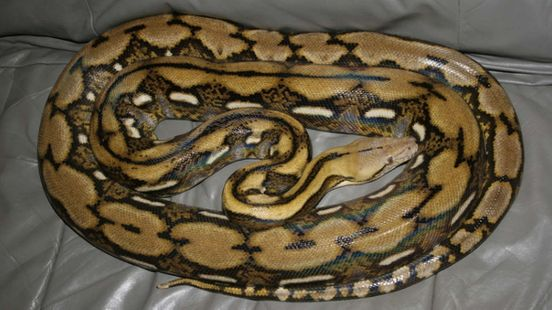 https://in.avalanches.com/bengaluru_shopkeeper_received_snake_in_the_courier_box_parcelled_from_delhi_to_bangalore5470_12_10_2019