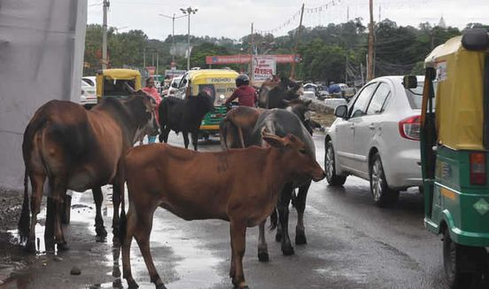 https://in.avalanches.com/ahmedabad_two_volunteers_who_participated_in_drive_to_impound_stray_cattle_were_killed11203_12_11_2019