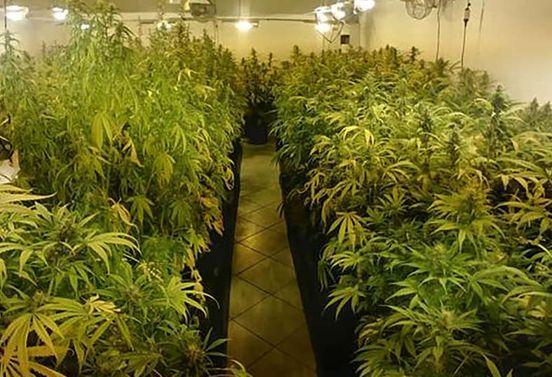 https://it.avalanches.com/brescia_alta_tecnologia_di_coltivazione_della_marijuana176960_28_04_2020