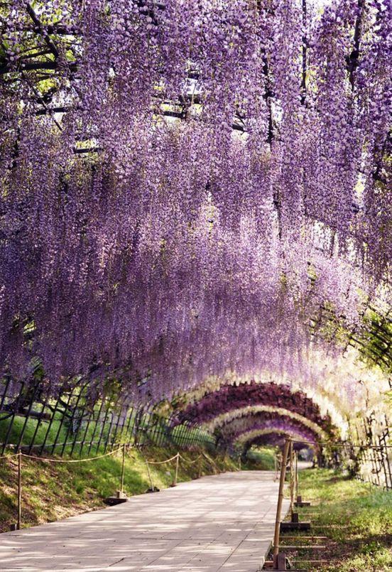 https://jp.avalanches.com/kitakyushu_kawati_fuji_flower_garden_in_kitakyushu17125_12_12_2019