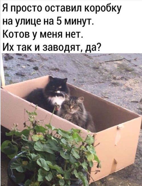 https://ua.avalanches.com/ivanofrankivsk__kak_zavesty_sebe_kota_292225_19_05_2020