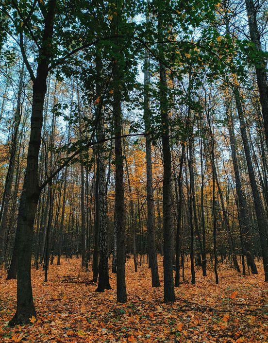 Moje ulubione miejsce na ziemi - las)