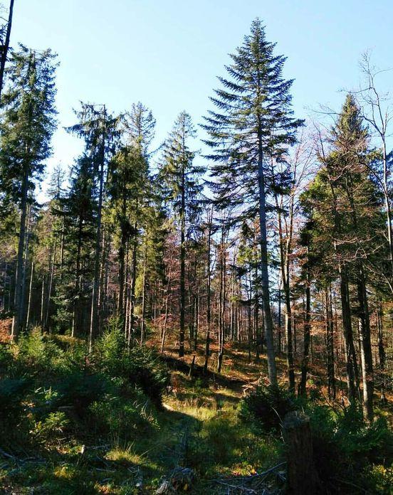 Piękno wokół nas Polska