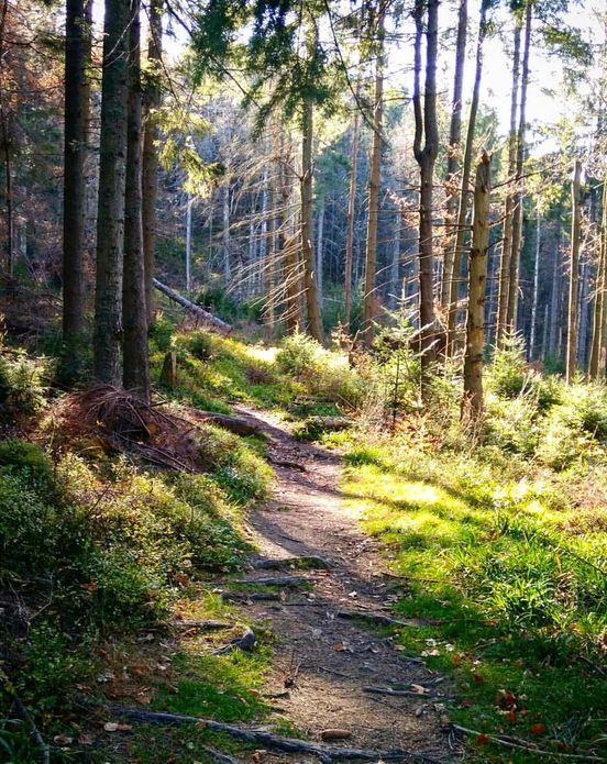 Spaceruj po lesie, Polska