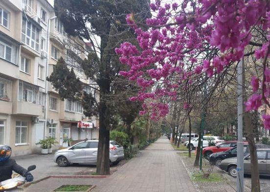 https://ru.avalanches.com/sochi_dlia_predpryiatyi_v_sochy_nbspvveden_otsrochky_po_naloham_y_kredytampl40901_02_04_2020
