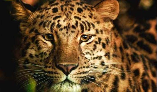 https://ru.avalanches.com/sochi_vpushchenne_yz_tsentra_vosstanovlenyia_v_sochy_dva_leoparda_daly_o_sebe_znat8150_27_10_2019