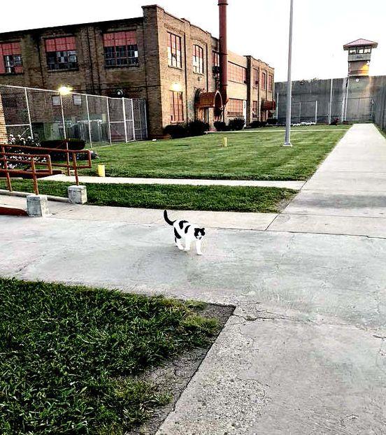 Как в тюрьме, котами лечат?