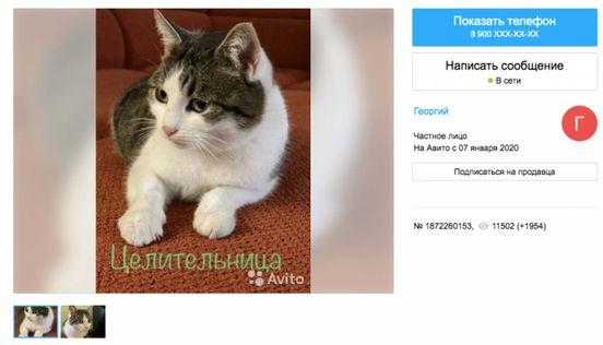 https://ru.avalanches.com/moscow_rossyiskyi_kot_za_320_tsiach_dollarov34319_05_03_2020