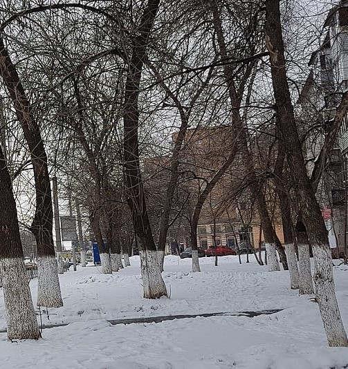 В парке Урицкого неизвестные портят стволы деревьев