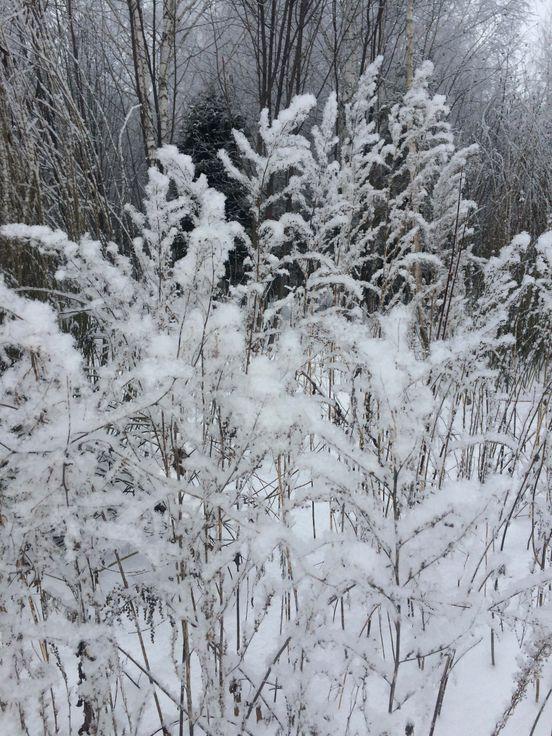 https://ru.avalanches.com/krutushka_pod_kazaniu_est_zapovednyk_holube_ozra_to_unykalnoe_mesto_hde31099_19_02_2020