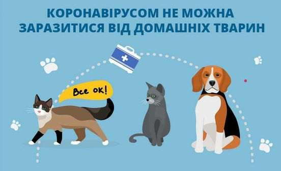 https://ua.avalanches.com/poltava_koronavirusom_ne_mozhna_zarazytysia_vid_domashnikh_tvaryn38585_25_03_2020