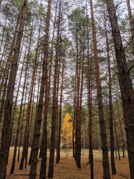 https://ua.avalanches.com/kremenchuk_pryiatnaia_prohulka_po_lesu8087_27_10_2019