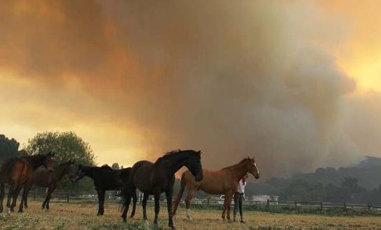 https://us.avalanches.com/california_horses_saved_mare_and_colt_during_california_wildfire_in_simi_vally13672_24_11_2019