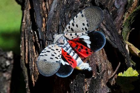 https://us.avalanches.com/philadelphia_lanternflies_all_around_the_pennsylvania25220_21_01_2020