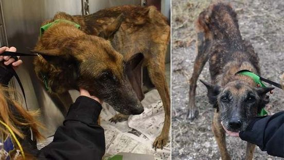 https://us.avalanches.com/houston_two_severely_malnourished_dogs_found_on_the_south_side_of_houston31055_19_02_2020