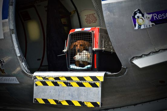 At-Risk Shelter Pets From Puerto Rico Flown to New Jersey
