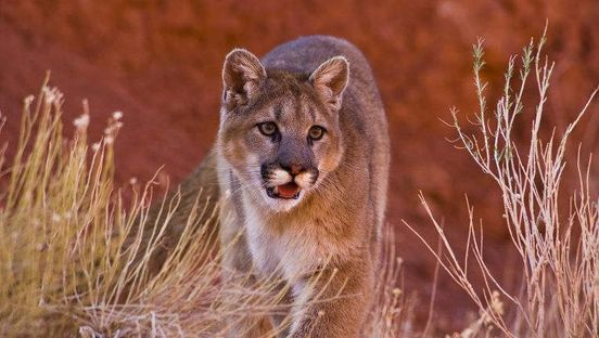 https://us.avalanches.com/phoenix_after_feeding_on_human_remains_3_mountain_lions_killed21785_05_01_2020