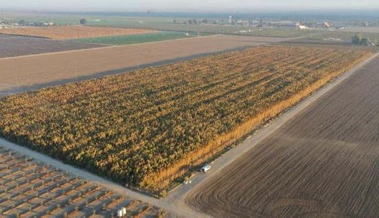 https://us.avalanches.com/los_angeles_pot_plants_worth_1_billion_destroyed_in_kern_county10244_05_11_2019